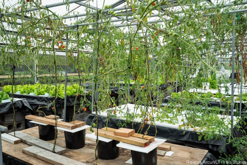 Greenhouse with seedlings.