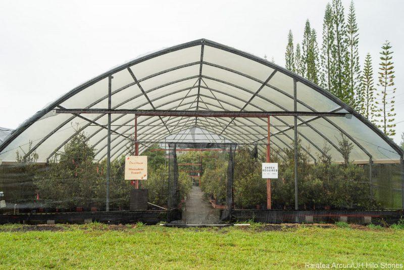 Ohia greenhouse.