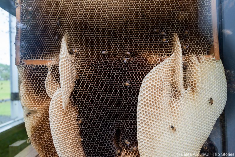 Inside beehives.