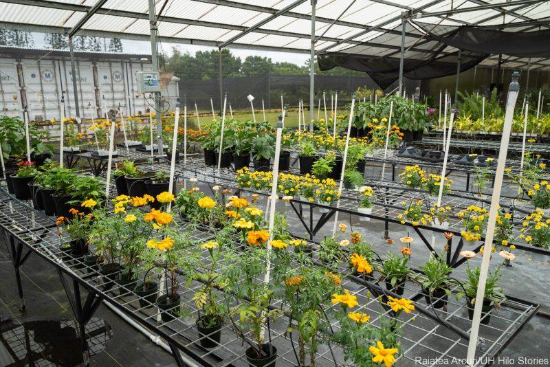 Greenhouse flowers.