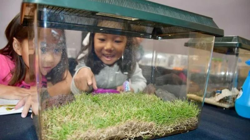 Two children look at bugs in a glass case