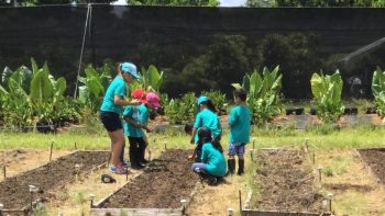 Children in veggie plots.