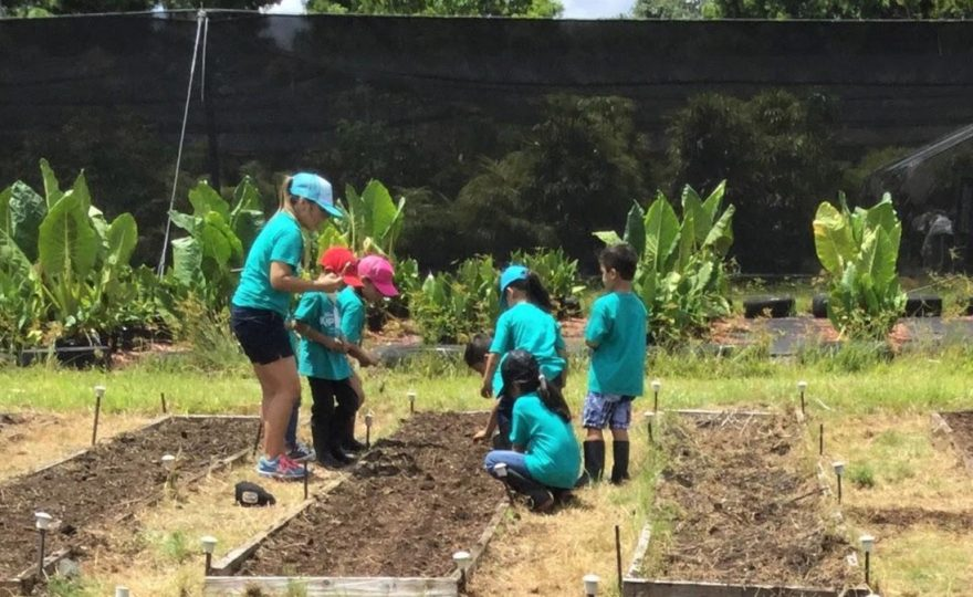 Schoolchildren learn about farming and livestock at UH Hilo Ag Farm