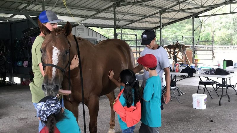 Children petting horse.