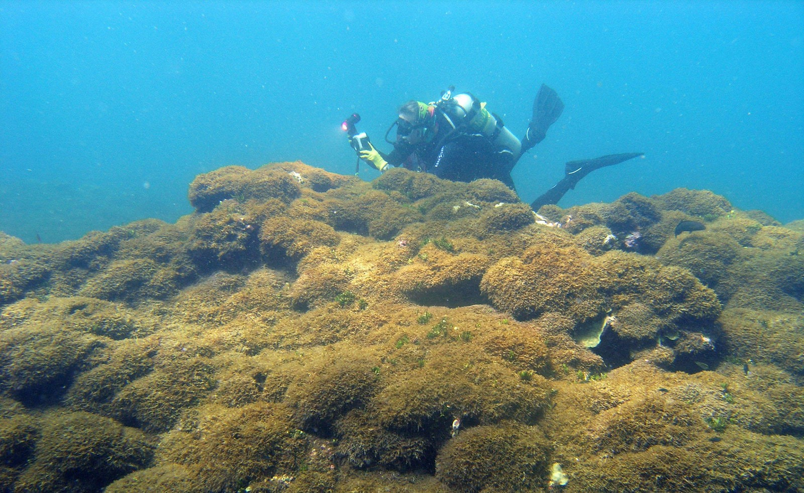 A diver takes photos of coral reef smothered in lumpy algae.