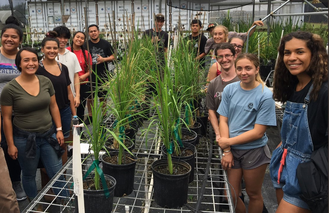 Class of students standing alongside greenhouse bench with pots of growing rice plants.