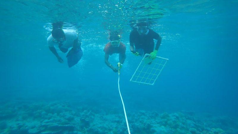 Three divers survey reef.