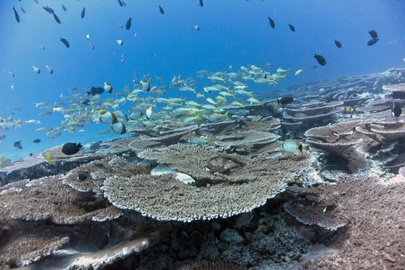 Beautiful reef with large school of fish, blue water,