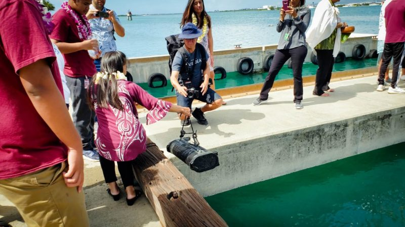 Student lowers basket containing oysters into water off pier.