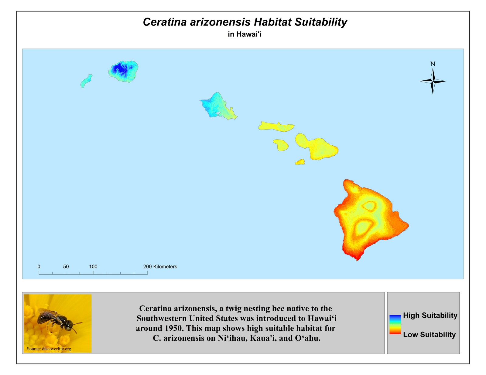 Map of Hawaii. Title: Ceratina arizonensis Habitat Suitability in Hawaii. Map is color coded to show high and low suitability islands. At bottom, the words: Ceratiina arizonensis, a twig nesting bee native to the Southwestern United States was introduced to Hawaii around 1950. This map shows high suitable habitat for C. arizonensis on Niihau, Kauai, and Oahu. Photo of the bee in left bottom corner.