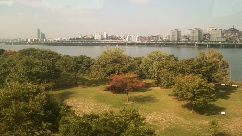 Beautiful park with large maple tree in open area, large body of water, and city skyline in distance.