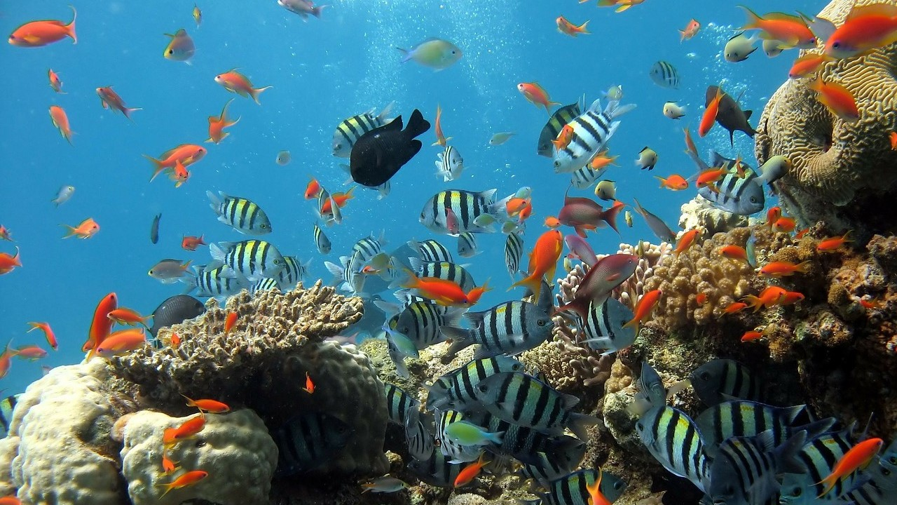 Schools of fish and coral reef