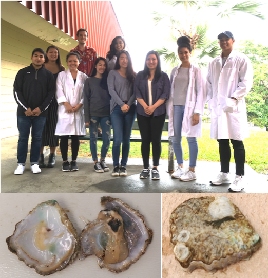 At top is photo of class of students, at bottom is two images of oyster.