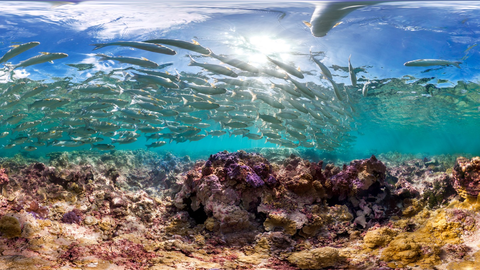 Large school of fish above coral reef.