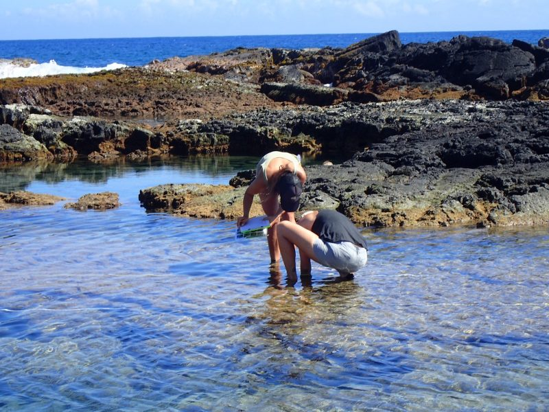Two women leaning over in tidepool examining contents.