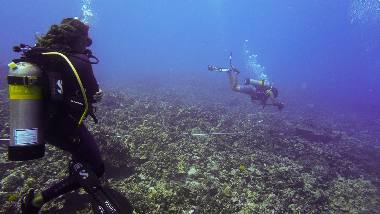 Ocean divers underwater.
