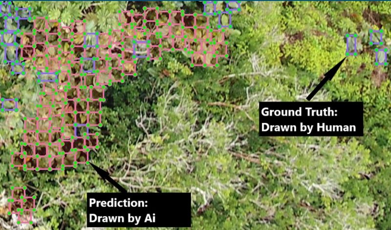 Overhead map of forest with predictions outlined in orange.