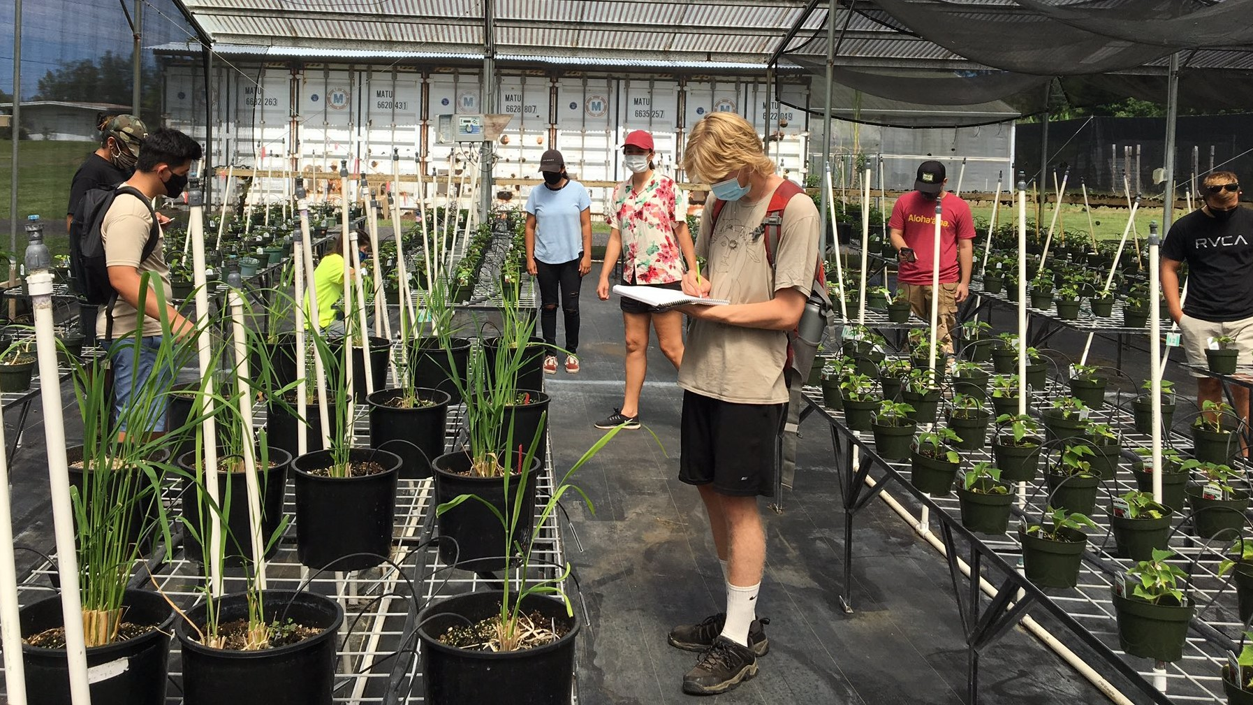 Student in masks, distant from each other, in greenhouse.
