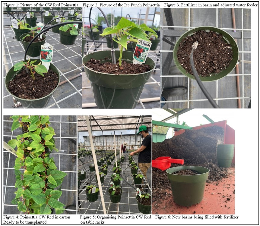 Six photos of greenhouse operations: potted plants, watering plants, soil, labeling.