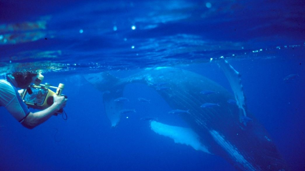 Adam Pack underwater with camera and whales.