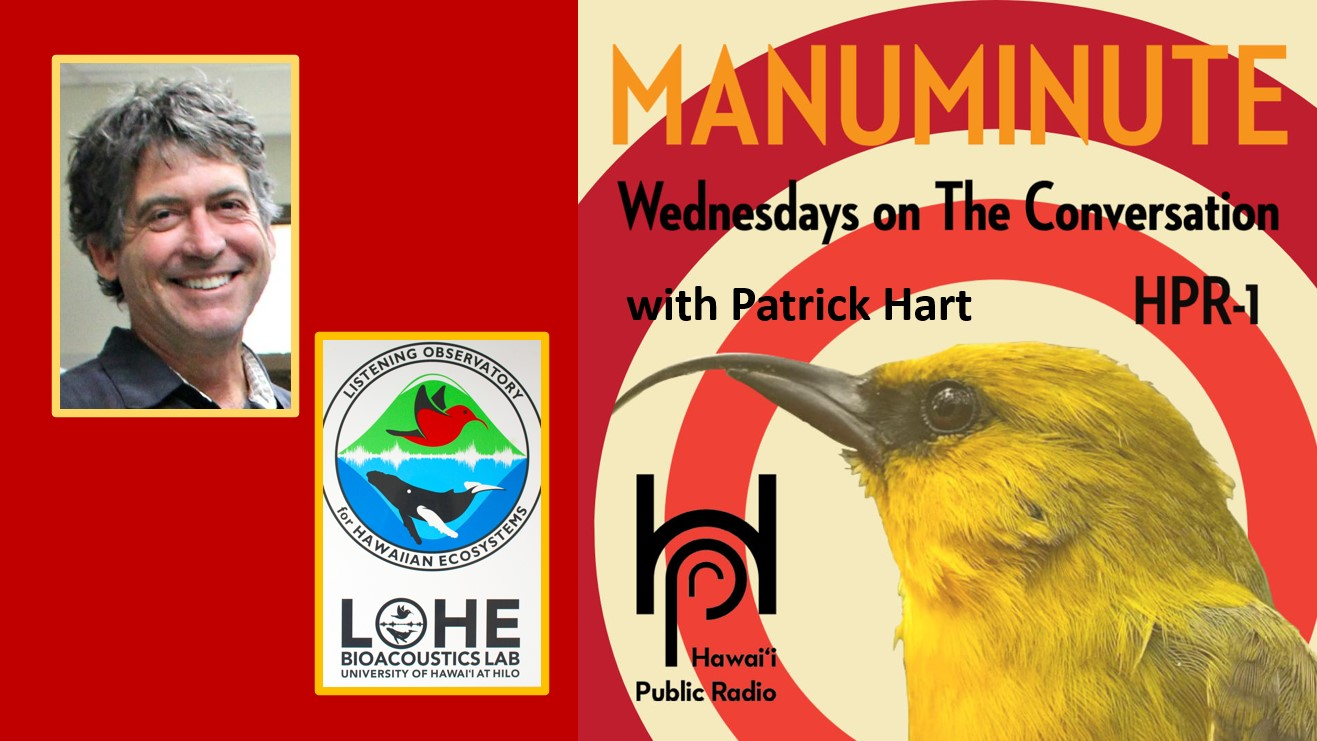 Photos of Pat Hart, the LOHE Lab logo and a bird. Words: Manuminutes Wednesdays on The Conversation, HPR