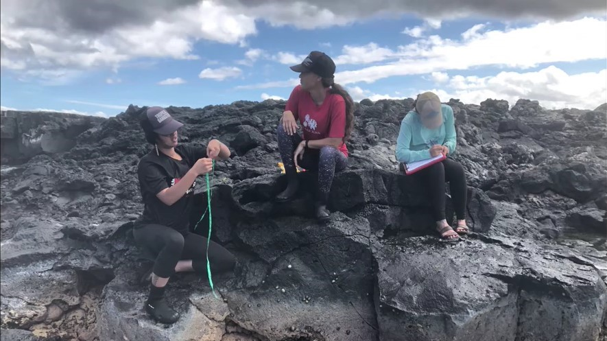 Researchers on coastline studying opihi.