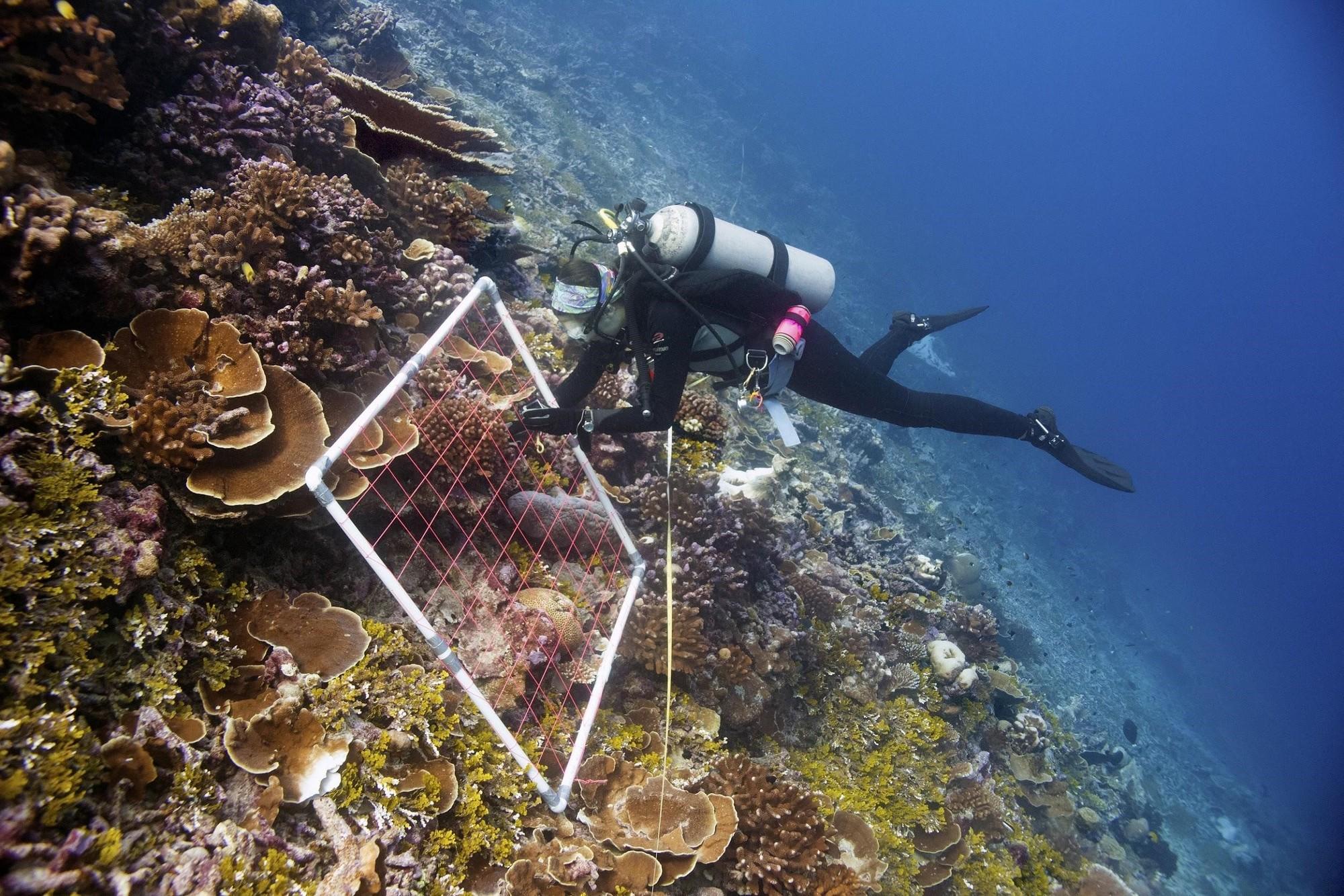 Diver with measuring apparatus.