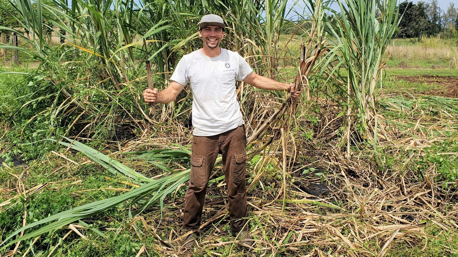 Jake Rodrique stands next to stand of sugarcane, holding seed cane in one hand and a cutting knife in the other.