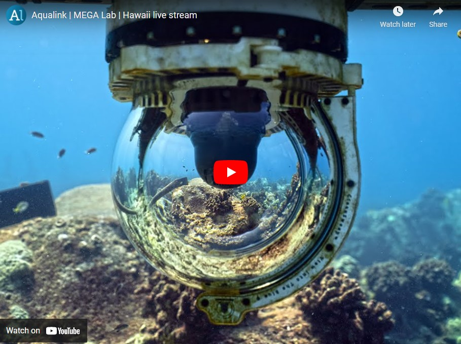 Ocean Livestream Screenshot