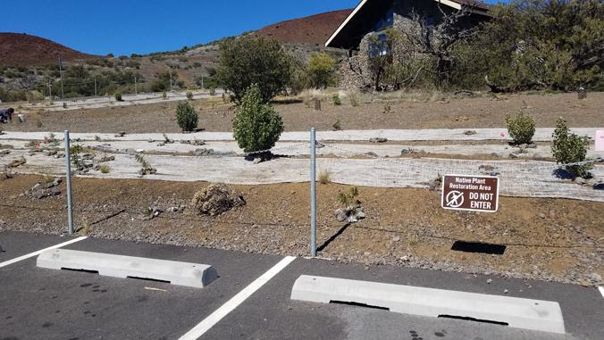 New plantings on edge of parking lot. Visitor Center in background.
