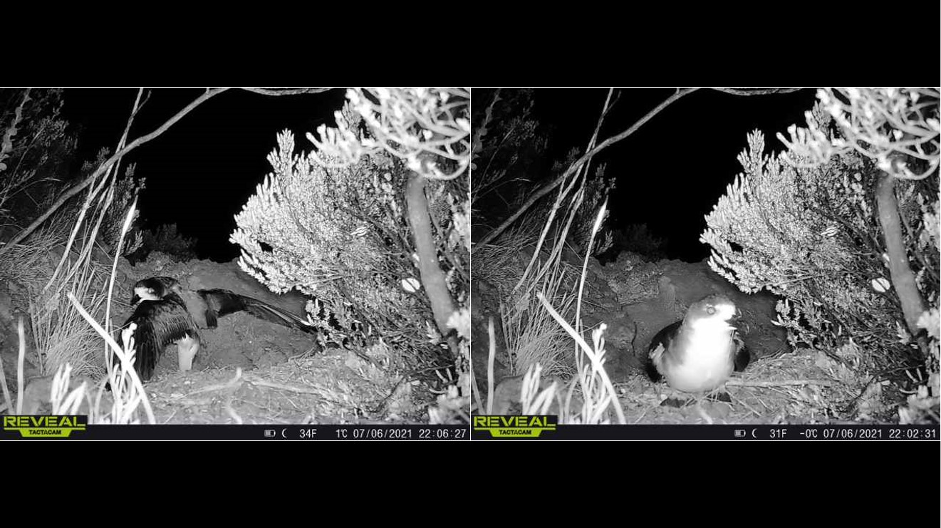 Two night visions photos of bird in nest.