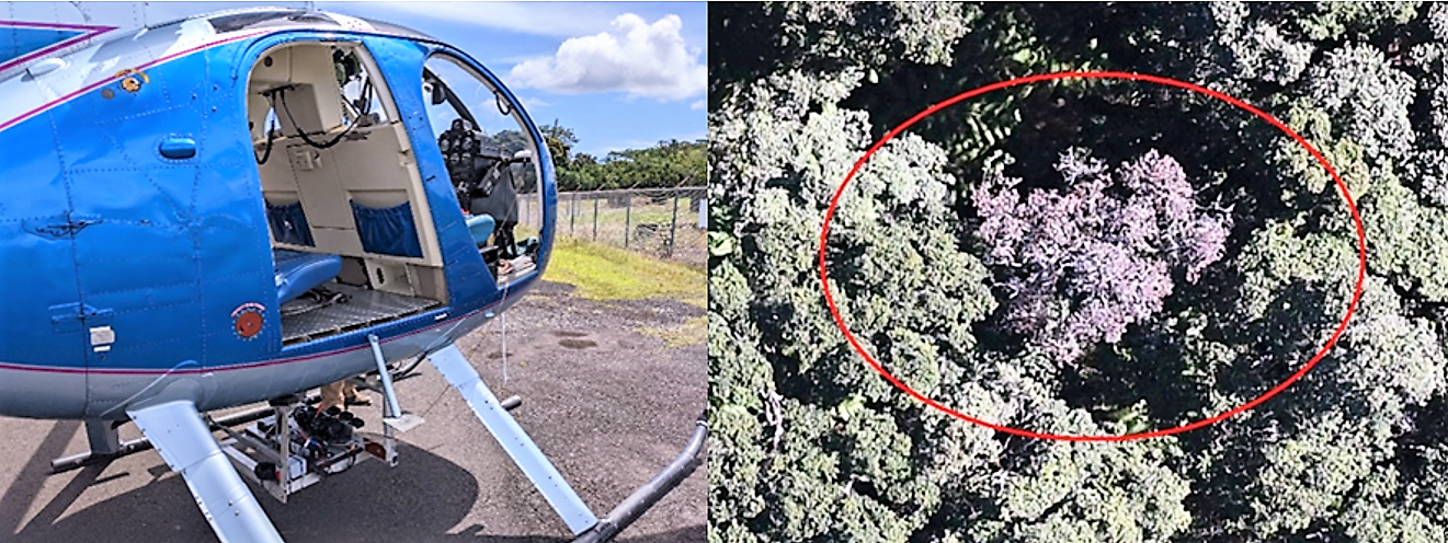 Two images: helicopter with camera set up in payload, and aerial of tree canopy showing a dead tree in forest.