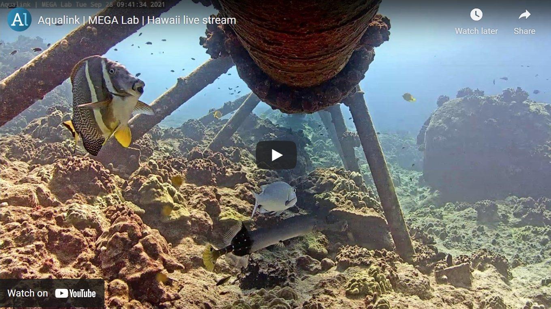Screenshot of underwater cam, fish and reef below.