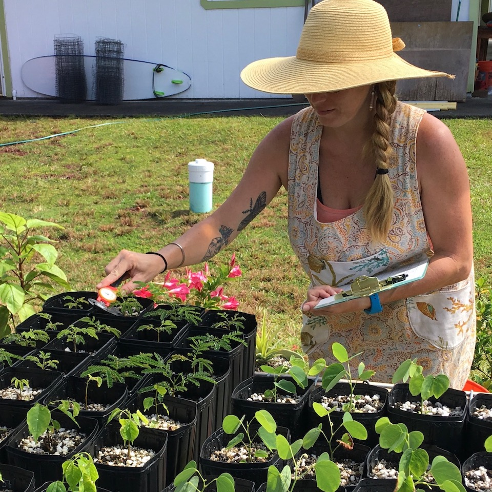 UH Hilo pharmacy student logs her plants progress in the garden.