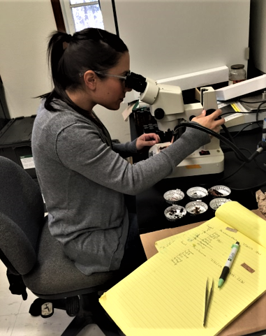 UH Hilo student takes a closer look at her samples through her microscope.