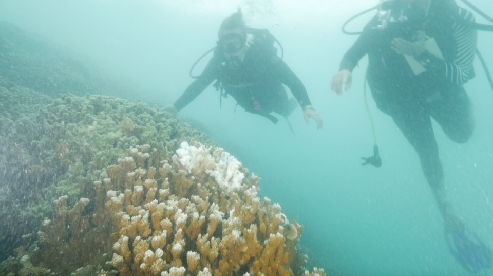 two divers swim by a bleached coral