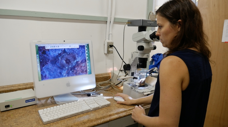 Dr. Hollie Putnam stands at a lab computer observing an image of coral