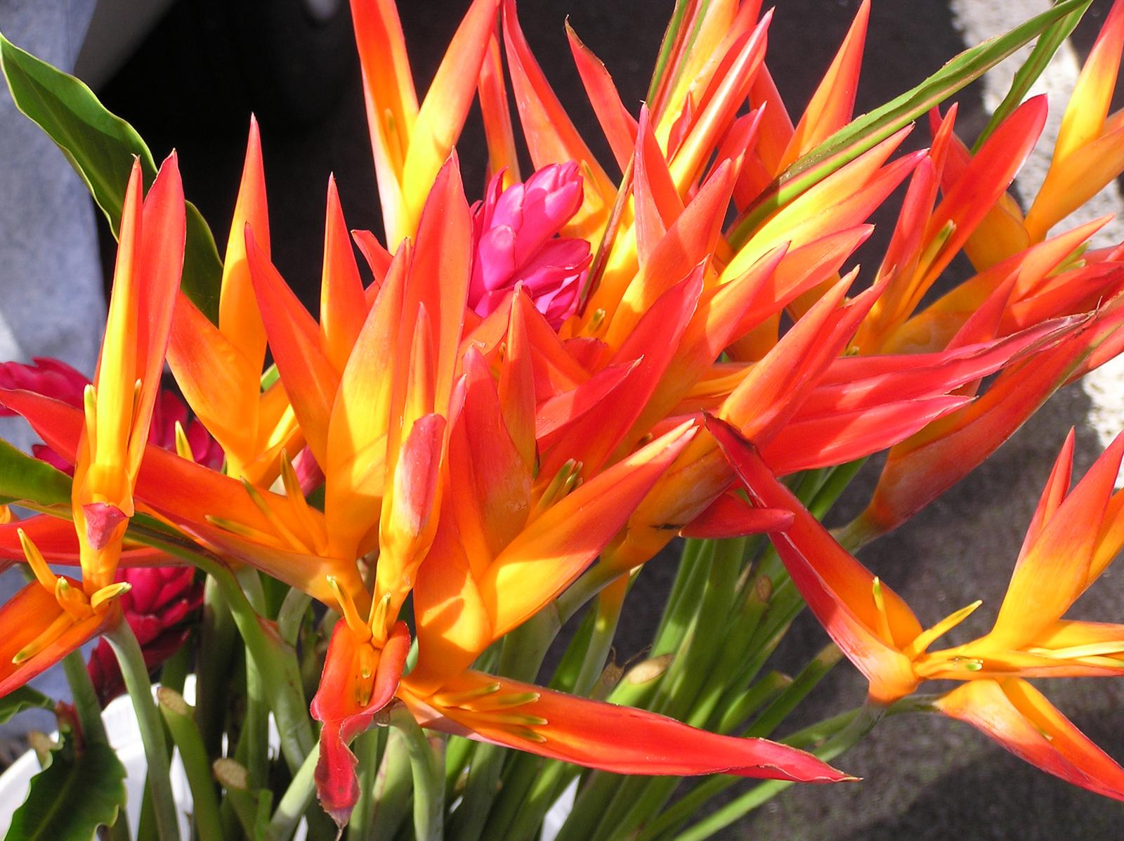 Beautiful big island colorful flowers photo by pam stewart nene izmirmasajfo
