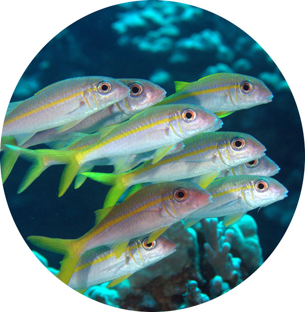 marine science fish image