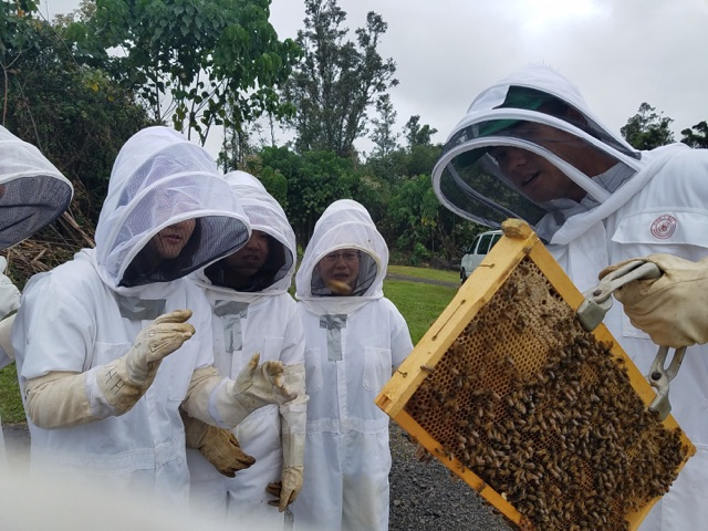 Beekeeping student, Kawai Genovia (left) showing students from Tokyo Kasei University  the honey bees at the UH Hilo farm.