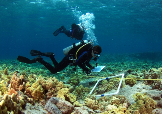 Divers using transects to map coral on the ocean floor