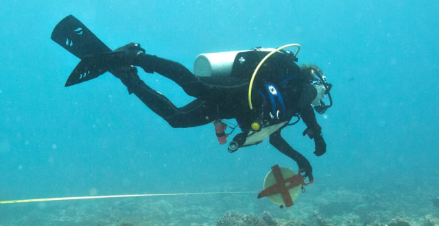 A diver swims with a measuring tape