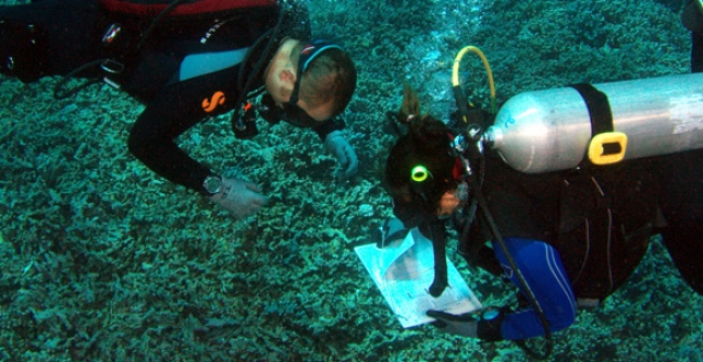 Divers take notes underwater