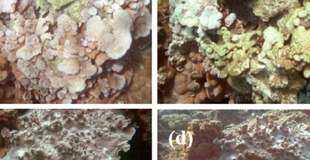 Quadrants showing progressive coral bleaching