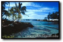 A picture of clear water and blue sky, taken near one of the beaches near Hilo.