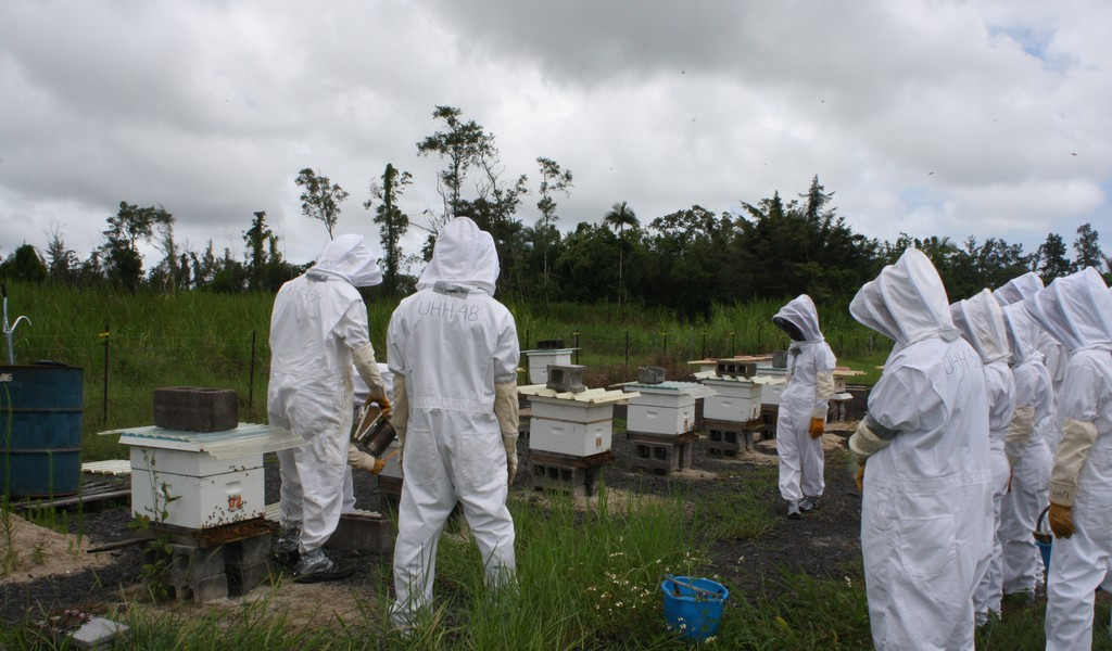 Students in white bee suits and head netting inspecting bee boxes in field.