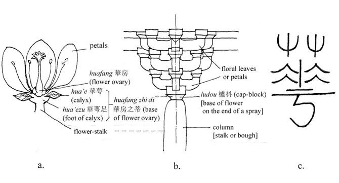 Illustration of flower and correlative architectural column.
