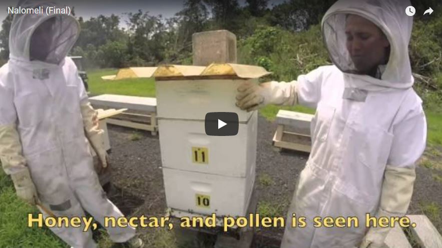 Still from video of two student and bee hives.
