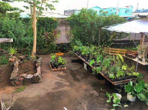 Hilo UrbFarm, A Small Composting And Food Garden Operation, Is Located At  The East Hawaiu0027i Cultural Center.