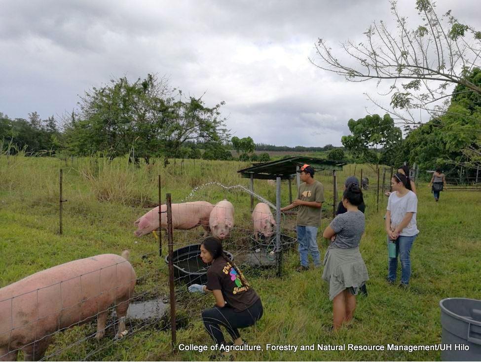 Students watering hogs.